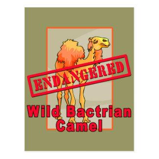 Endangered Wild Bactrian Camel Tshirts Postcard