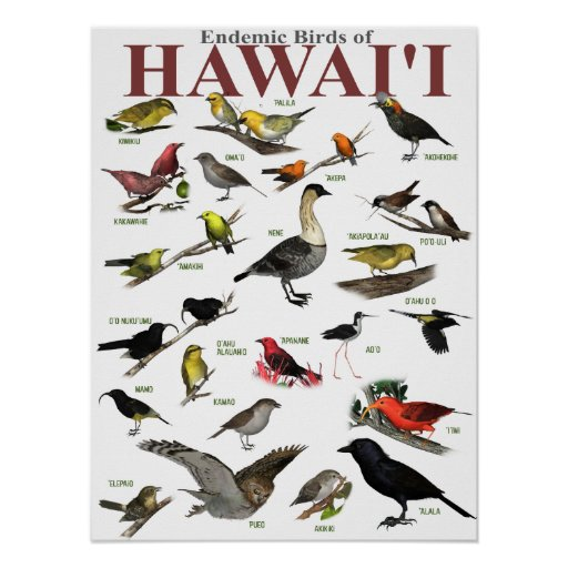 Endemic Birds of Hawai'i Poster