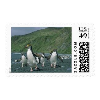 Endemic real de los pingüinos (schlegelii del estampillas
