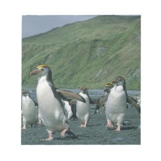 Endemic real de los pingüinos (schlegelii del Eudy Libretas Para Notas