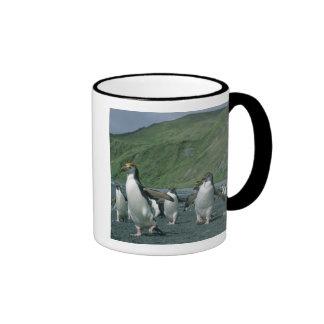 Endemic real de los pingüinos (schlegelii del Eudy Taza De Café