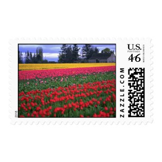 Endless Colors Of Tulips stamp