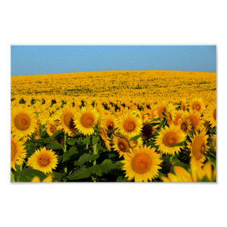Endless Sunflowers Poster
