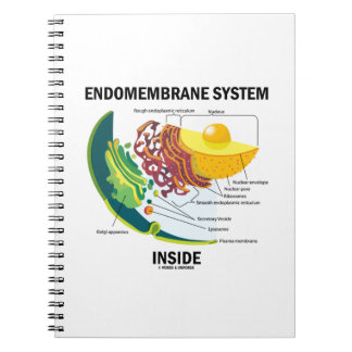 Endomembrane System Inside (Cell Biology) Note Books
