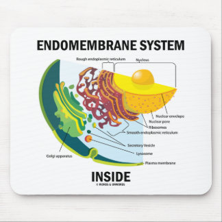 Endomembrane System Inside Mouse Pad