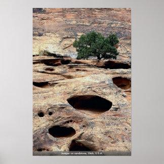 Enebro en la piedra arenisca Utah los E E U U Poster