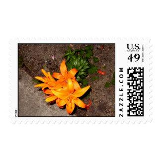 Energetic Orange Keepsake Collection Postage