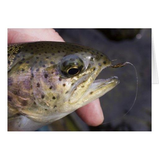 Enganchado en la pesca con mosca - tarjeta