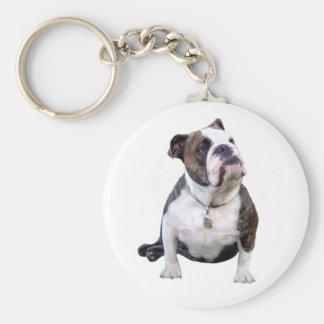 Engish Bulldog - brown and white Key Chains