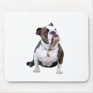 Engish Bulldog - brown and white Mouse Pad
