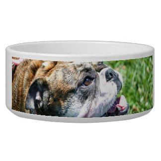 Englinsh bulldog bowl