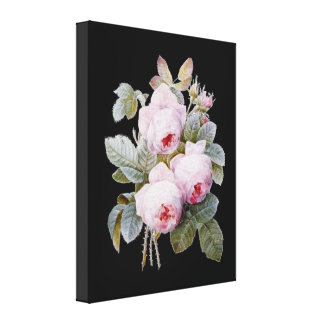English Bourbon Roses on Black by Redoute Stretched Canvas Prints