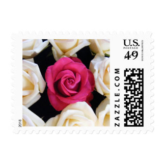 English Box Rose Postage