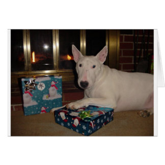 english bull terrier christmas present greeting card