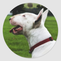 English Bull Terrier Classic Round Sticker