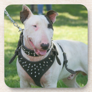 English bull terrier coaster