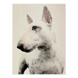 English Bull Terrier Dog Posters