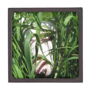 English Bull Terrier Hiding in the Grass Jewelry Box