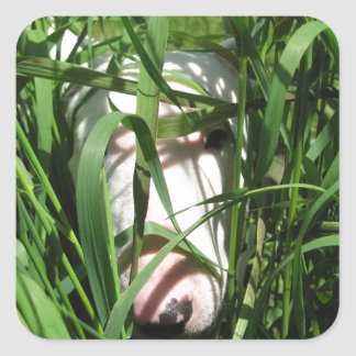 English Bull Terrier Hiding in the Grass Square Sticker