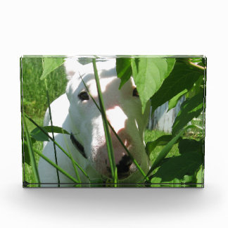 English Bull Terrier Peeking Through the Leaves Award
