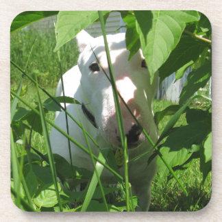 English Bull Terrier Peeking Through the Leaves Beverage Coaster