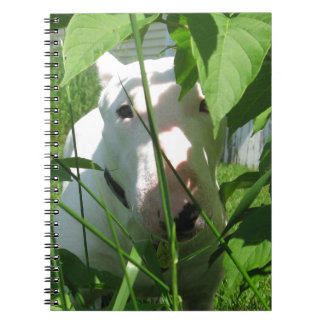 English Bull Terrier Peeking Through the Leaves Notebook