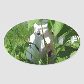 English Bull Terrier Peeking Through the Leaves Oval Sticker