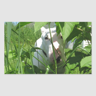 English Bull Terrier Peeking Through the Leaves Rectangular Sticker