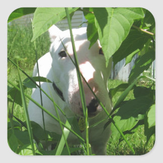 English Bull Terrier Peeking Through the Leaves Square Sticker