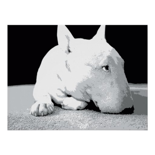 english bull terrier  pop art print