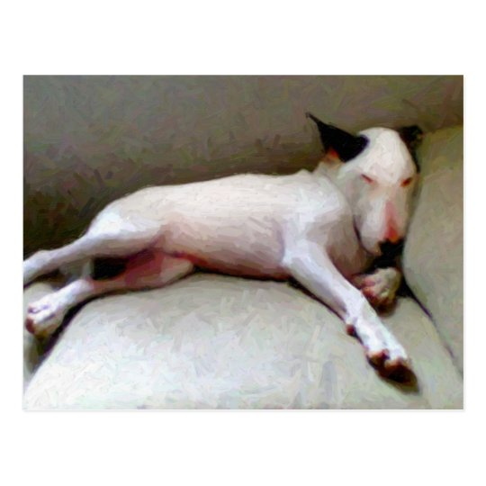 English Bull Terrier Postcard