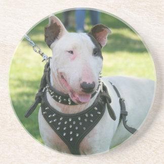 English bull terrier sandstone coaster