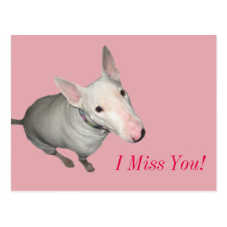 English Bull Terrier Sitting Pretty-I Miss You! Postcard