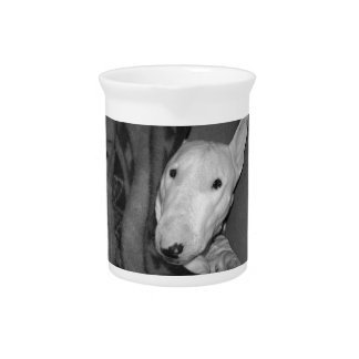 English Bull Terrier Snuggled Under a Blanket -BW Pitchers