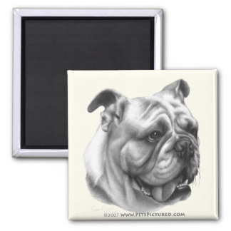 English Bulldog 2 Inch Square Magnet
