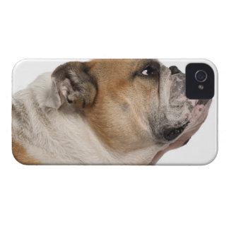 English Bulldog (6 years old) iPhone 4 Case-Mate Case