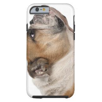 English Bulldog (6 years old) Tough iPhone 6 Case