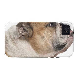 English Bulldog (6 years old) iPhone 4 Case