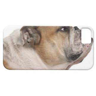 English Bulldog (6 years old) iPhone 5 Covers