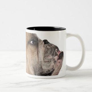 English Bulldog (6 years old) Two-Tone Coffee Mug