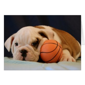 English Bulldog Basketball Puppy