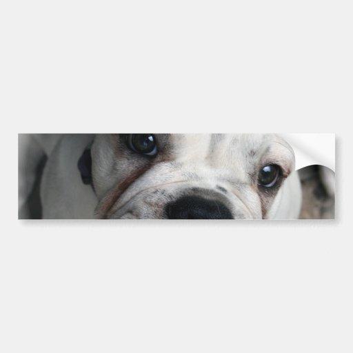 English Bulldog Bumper Sticker