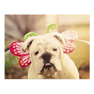 English Bulldog Butterfly Photo Postcard