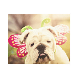 English Bulldog Butterfly Wrapped Canvas