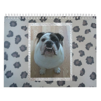 English bulldog calendar! calendar