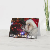 English Bulldog Christmas Holiday Card