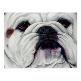 English Bulldog Close and Personal Post Card