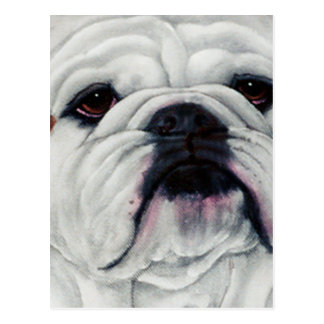 English Bulldog Close and Personal Postcards
