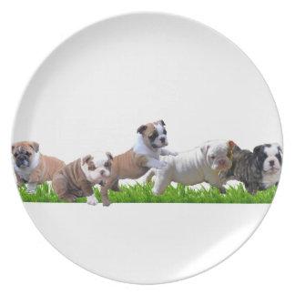 English Bulldog Dinner Plate