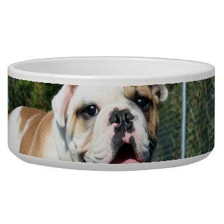 English bulldog dog bowl
